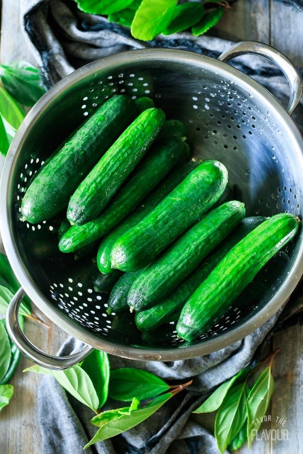 fresh pickling cucumbers in a metal colander