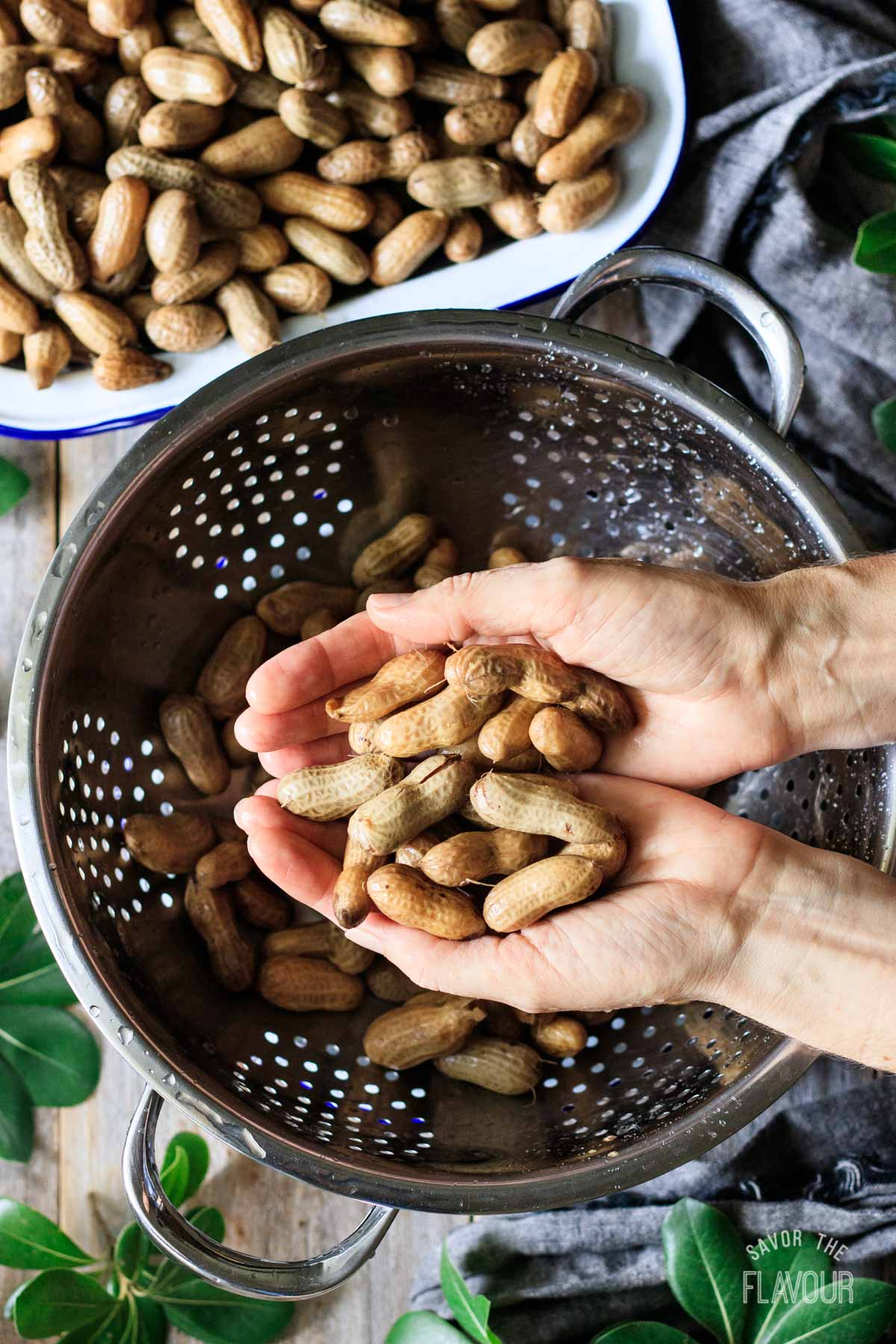 person holding a handful of boiled peanuts above a colander
